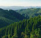 富山の森を守る
