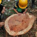 『秋の伐採体験』を開催!